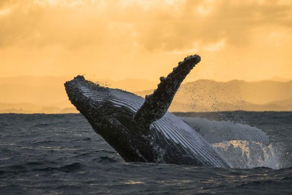 Whale Watching Tours   The Wilds NL